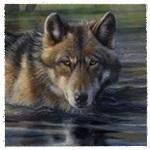 Гиф gif Волк осторожно плывет по водоему рисунок