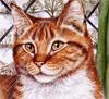 Смайлик Морда рыжика аватар