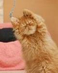 Гиф gif Рыжий котенок поднял лапки рисунок