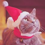 Картинка Серый кот в новогодней шапочке анимация