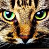 Картинка Кошка с зелеными глазами анимация