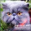 Смайлик Персидский котик аватар