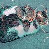 Картинка Три спящих кота анимация