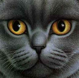 Темно-серый кот