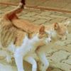 Смайлик Влюбленные кот и кошка идут вместе, рядом аватар