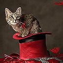 Смайлик Котенок на красной шляпе аватар