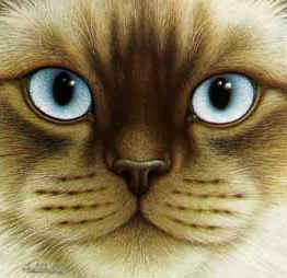 Картинка Голубоглазый кот анимация