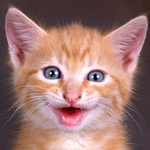 Смайлик Улыбающийся котёнок аватар