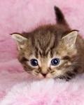Гиф gif Маленький котенок рисунок