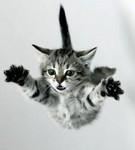 Смайлик Кот в полете аватар