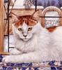 Смайлик Бело-рыжая киса аватар