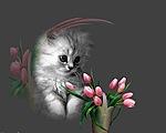 Картинка Котенок рядом с букетом тюльпанов анимация