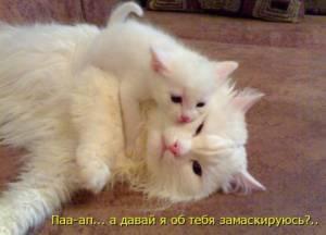 Картинка Белый кот с котенком анимация