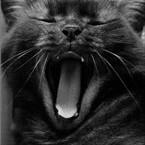 Гиф gif Кошка сладко зевает рисунок