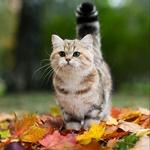 Коты смайлик