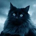 Пугающе умный взгляд чёрной кошки смайлики картинки