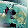 Сиамский котик в шоке (-йошкин кот!) картинка смайлик