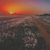 Гиф gif Закат и поле рисунок