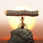Гиф gif Трудяга муравей тащит брёвнышко в муравейник, а время уже... рисунок
