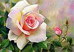 Картинка Нежная роза желто-розовая анимация