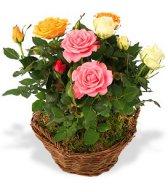 Смайлик Розы садовые микс аватар