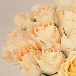 Гиф gif Бежевые розы рисунок