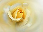 Смайлик Роза для Танечки аватар