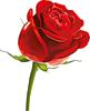 Смайлик Красная роза сконилась аватар