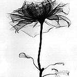 Смайлик Готика, готические, темные, страшные, ужасные роза аватар