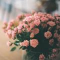 Гиф gif Светло-розовые розы в вазе рисунок
