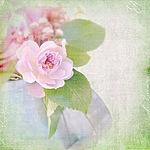 Смайлик Роза для Оксаны аватар