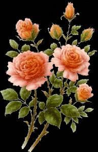 Картинка Цреты - розы анимация