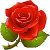 Прекрасная красная роза. Цветы