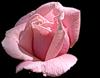 http://liubavyshka.ru/_ph/2/2/601881099.png