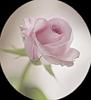 http://liubavyshka.ru/_ph/2/2/803547938.png