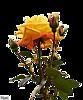 http://liubavyshka.ru/_ph/2/2/82960548.png