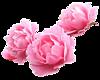 http://liubavyshka.ru/_ph/2/2/860458046.png