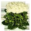 http://liubavyshka.ru/_ph/2/2/886950618.png