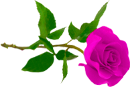 http://liubavyshka.ru/_ph/2/2/916670644.png