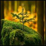 Картинка Прорастающее дерево анимация