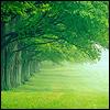 Гиф gif Зеленые деревья рисунок
