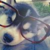 Смайлик Пёсик в очках аватар
