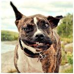 Картинка Смешная морда пса анимация