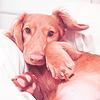 Смайлик Собака лежит аватар