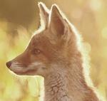 Смайлик Лисенок в солнечном свете аватар