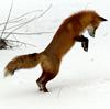 Лиса прыгает смайлики картинки