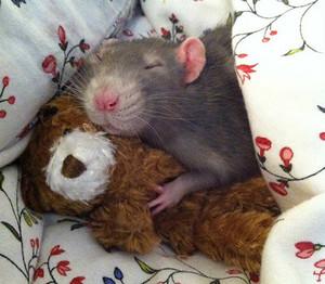 Картинка. Доброе утро! Мышка <b>спит</b> в обнимку с мишкой