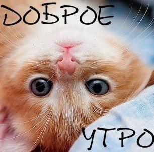 картинки котёнок с добрым утром