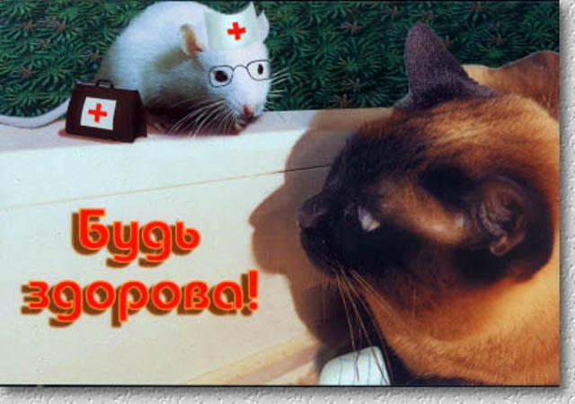 выздоравливай кошка картинки масляной