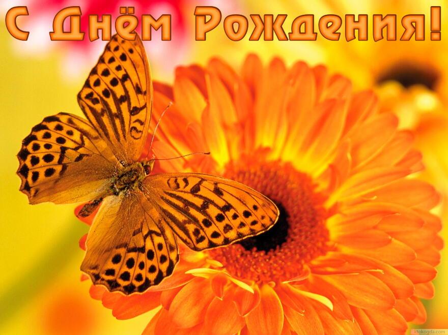 Открытка с Днем Рождения, цветок и бабочка смайлики картинки